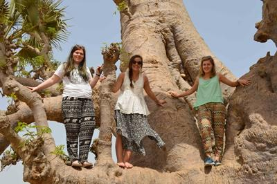Volunteers on a gap year posing in a tree on a day off in Senegal