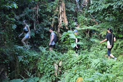Volunteers hiking in the Samoan rainforest